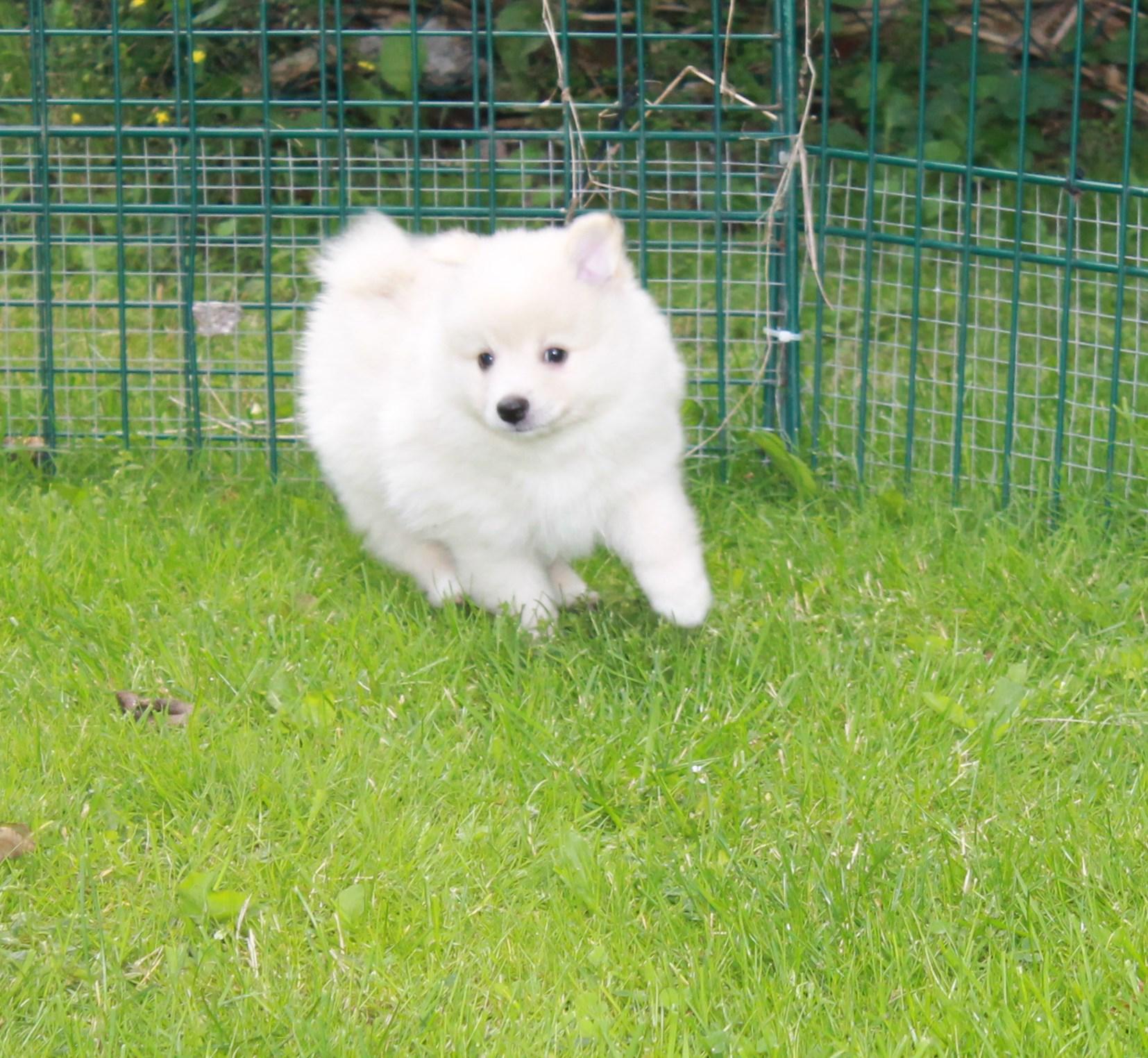 Hundar till salu Kennel Dazzling Flash